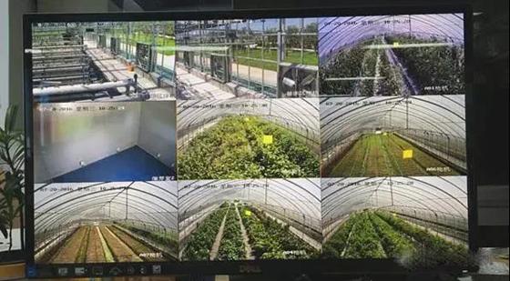 温室大棚物联网实践案例中农业传感器运用