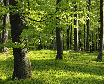 物联网林业标准融