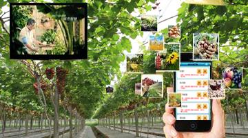 恺易物联网助推农业种植规模化发展
