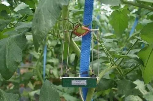 农业物联网:以色列农业发展的重要支柱